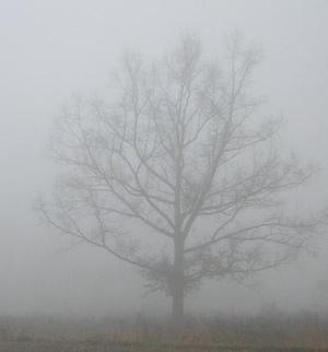 Fog2_3